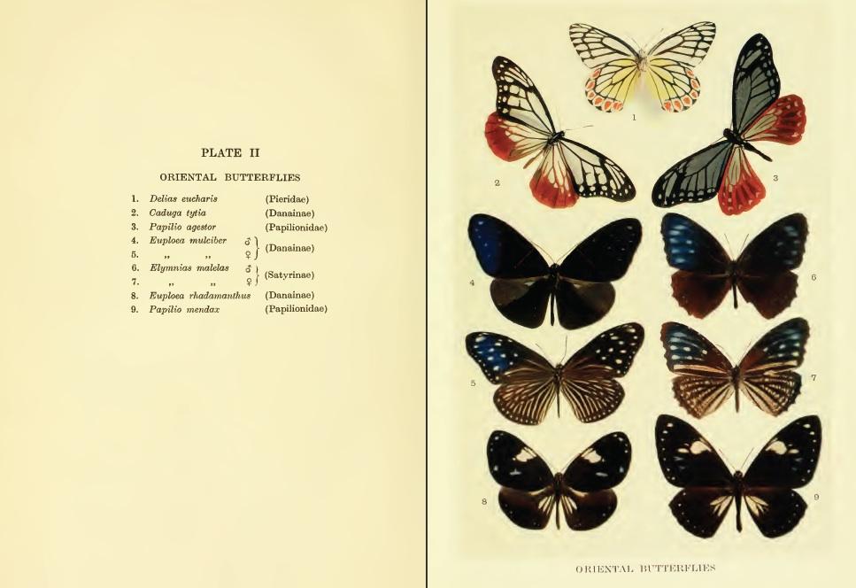 Punnett Oriental Butterfly plate