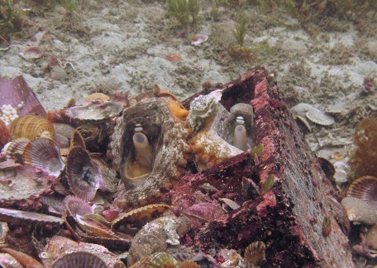 Octopus Kiss_2002 - 2011 V2