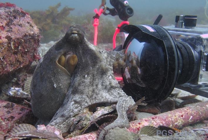 Octopus with Matt's camera_0867