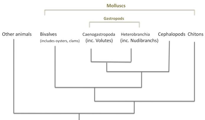 Molluscs 2