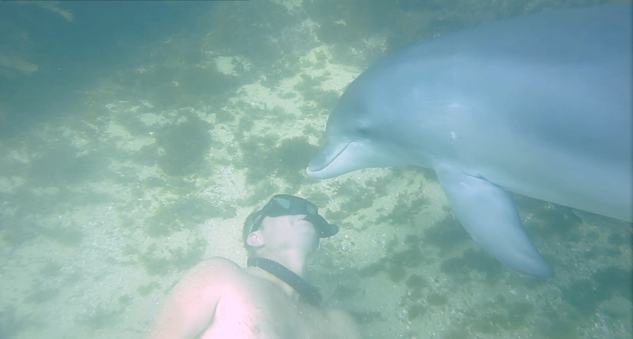 dolphin and man Shelly 2014